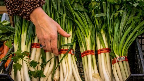 productos consuegra calsot cebolleta